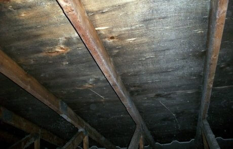 Mold problem in attic - remediation services in Montreal