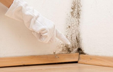 Mold removal & remediation services Montreal