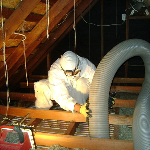 Vermiculite in attic - decontamination service