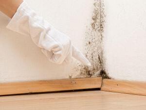 Décontamination moisissures presence champignons 001