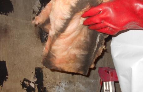 Décontamination moisissures champignons laine